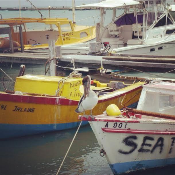 seagul on boat in aruba